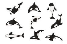 Set Of Killer Whale(Orcinus Orca) Cartoon Animal Design Ocean Mammal Orca Flat Vector Illustration Isolated On White Background