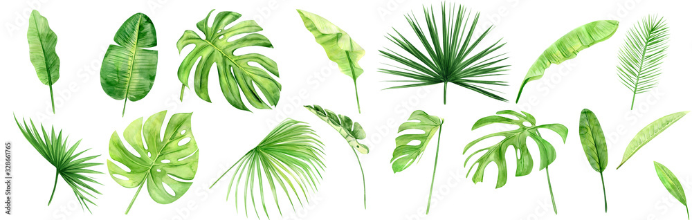 Fototapeta Green palm leaves set. Tropical plant. Hand painted watercolor illustration isolated on white background. Realistic botanical art. Design element for fabrics, invitations, clothes and other
