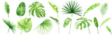 Green Palm Leaves Set. Tropical Plant. Hand Painted Watercolor Illustration Isolated On White Background. Realistic Botanical Art. Design Element For Fabrics, Invitations, Clothes And Other