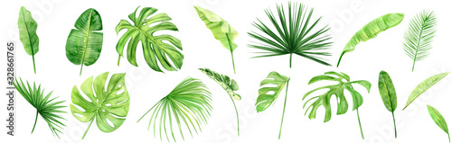 Fototapeta Green palm leaves set. Tropical plant. Hand painted watercolor illustration isolated on white background. Realistic botanical art. Design element for fabrics, invitations, clothes and other obraz