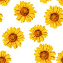 Sunflower Seamless Pattern. Ba...