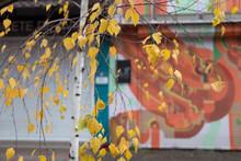 Beautifull Autumn Background W...