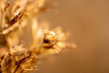 A Beautiful Dry Plant Lit By T...