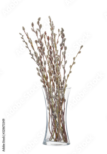 Fotografie, Obraz Willow twigs isolated on white background. without shadow