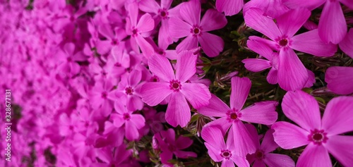 purple flowers on a green background - 328677131