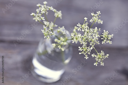 Delicate White Parsley Close Up Fototapete
