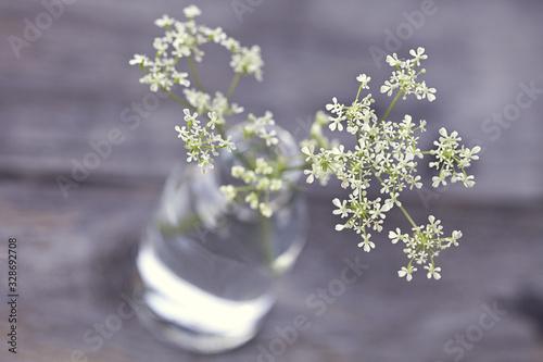 Foto Delicate White Parsley Close Up