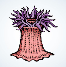 Sea Creature. Vector Drawing I...