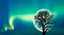 """Silhouette Of Birds And Lone Tree With Northern Lights (Aurora Borealis) On The Background Full Moon """"Elements Of This Image Furnished By NASA"""""""