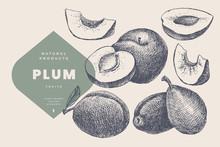 Hand Drawn Plum. Natural Fruit...
