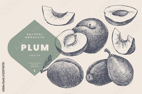 Fototapeta Hand drawn plum. Natural fruit, whole and cut. Organic food concept. Can be used as element in design of gastronomy, menus and packaging. Vintage botanical illustration on isolated background. obraz