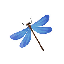 Bright Blue Dragonfly Insect Isolated On White.
