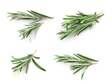 Fresh Green Rosemary Sprigs Isolated On A White Background