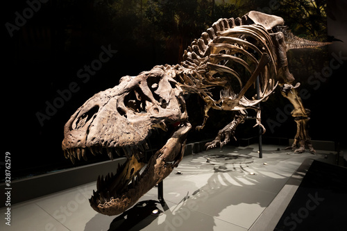 old dinosaur skeleton in museum Fototapete