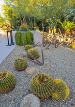 A Group Of Succulent Plants And Cacti In The Phoenix Botanical Garden, Arizona, USA