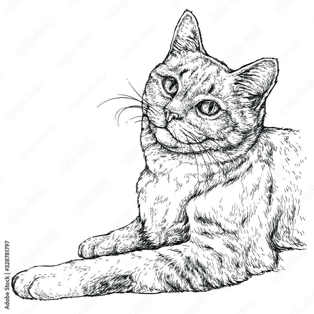 Fototapeta Hand drawn portrait of cute Cat. Vector illustration isolated on white