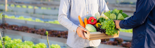 Fototapeta Two young asian man picking up fresh organic vegetable with basket together in the hydroponic farm beautiful, harvest and agriculture for healthy food and business concept, banner website. obraz