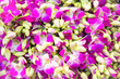 canvas print picture - Closeup view of heap of many pink and purple tropical orchid flowers. Can be used as nature flower background