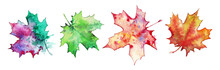 Collection Of Maple Leaves On A White Background,watercolor Painting. A Set Of Elements For Design And Creativity.