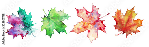 Collection of maple leaves on a white background,watercolor painting Canvas