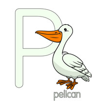 Vector Illustration Of Pelican...