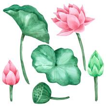 Lotus Flower And Leaf Watercol...