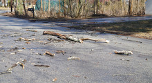 Fallen Tree Trunk On The Street