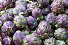 Close Up Of Many Purple Globe Artichokes, Cynara Cardunculus, Background Image