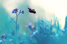 Butterfly On A Flower Spring O...