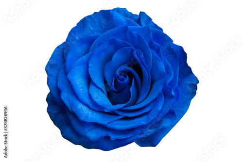 Fototapeta blue rose isolated obraz