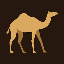 Camel Vector Graphic Element D...