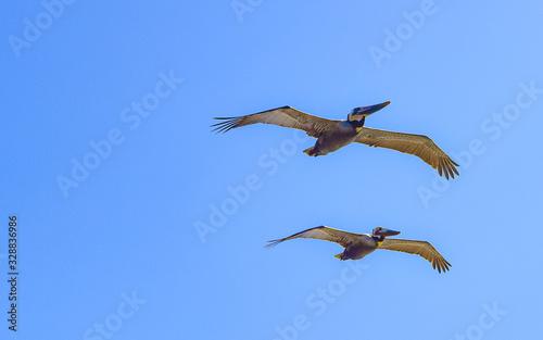 albatross Fototapeta