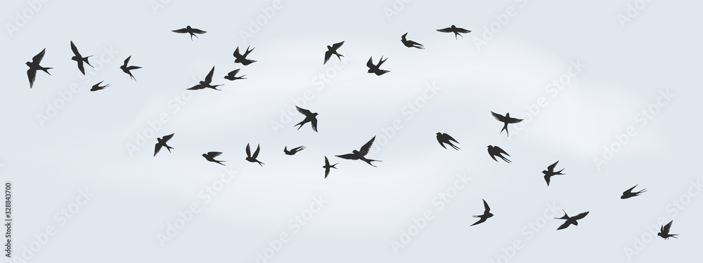 Flying birds silhouette. Flock of black marine birds, doves, seagulls or swallows for decoration, isolated black on white background. Vector freedom concept <span>plik: #328843700 | autor: SpicyTruffel</span>