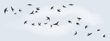Flying Birds Silhouette. Flock...