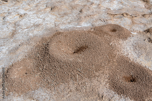 Anthill (or antholes) in Kyzylkum Desert Canvas Print