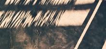 Closeup Of Saw Blade Of Grass,...