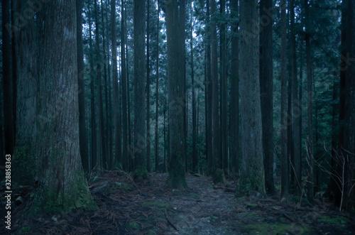 Photo 深い森