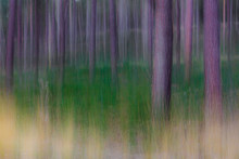 Forest Scene With Camera Creat...
