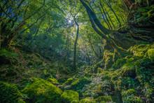 Primival Forest Hiking Trails ...