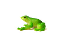 Close Up Of Green Frog Toy Isolated On White Background. Artificial Frog. Kids Toy. Rubber Toy.