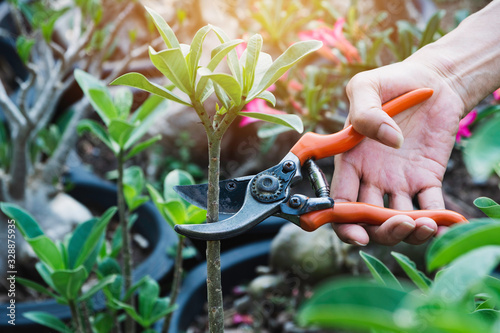 Leinwand Poster Gardener pruning trees with pruning shears on nature background.