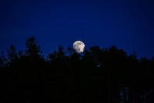 Full Moon Rising Over Treetops...