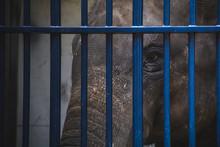Poor Elephant Behind Blue Bars