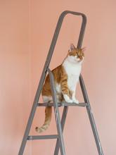 Orange Cat Sitting On Ladder