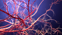 New Blood Vessel Formation
