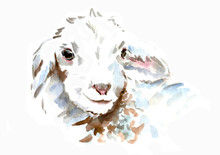 Stock Illustration. The Sheep Is Painted With Watercolors. Isolated On White Background.