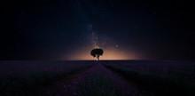 Lonely Tree Under Million Star...