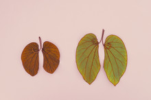 Lung Shaped Leaves, World Tube...