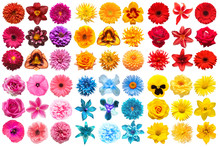 Big Collection Of Various Head Flowers Orange, Purple, Yellow, Pink, Blue And Red Isolated On White Background. Perfectly Retouched, Full Depth Of Field On The Photo. Top View, Flat Lay