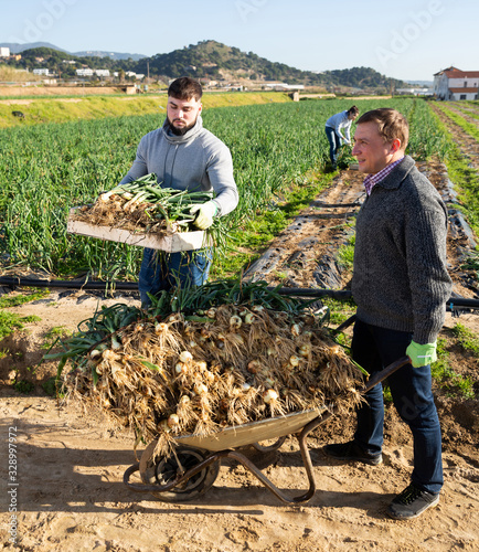 Photo Team of workers harvests green onions on a plantation